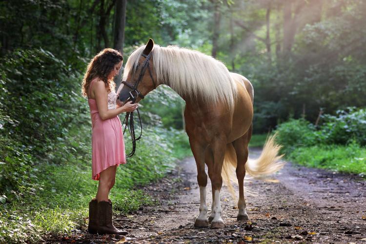 Long Brown Horse Pet
