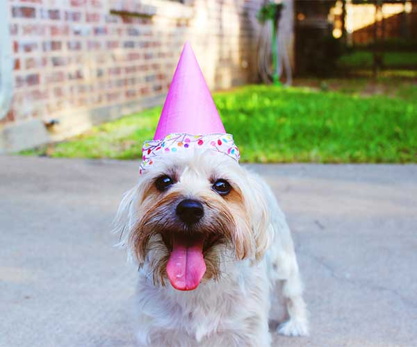 Celebrate your pet's life