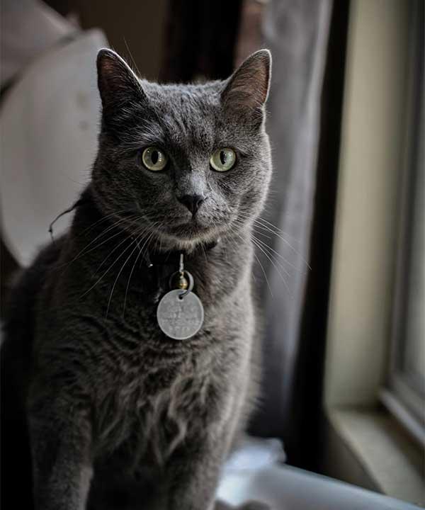 You should consider getting a pet memorial