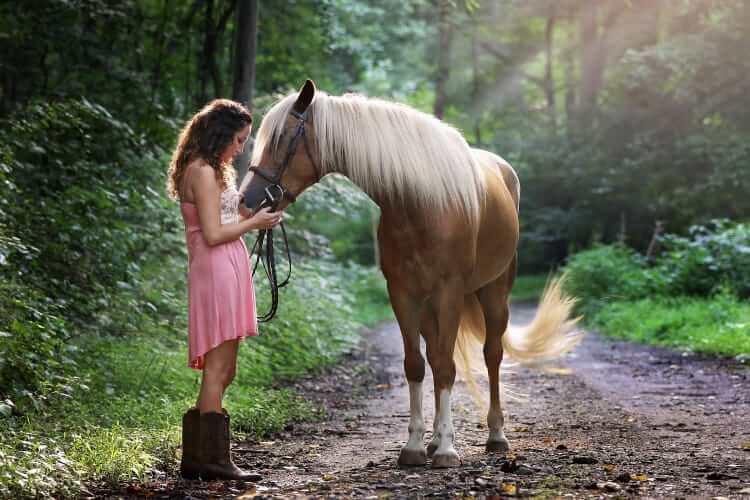 Pet Horse