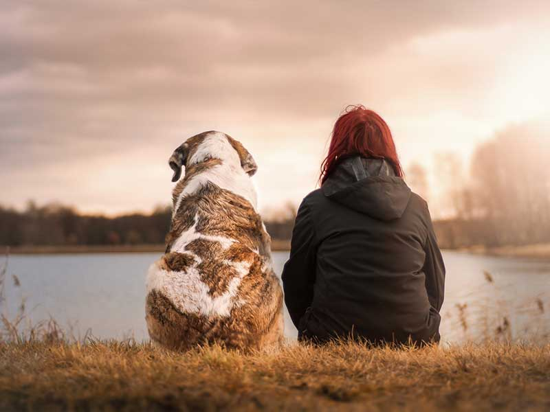 What Are The Things To Consider When Getting A Pet Memorial Stone?