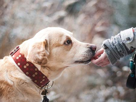 What are the Additional Features to Consider When Choosing Pet Memorial Stones?