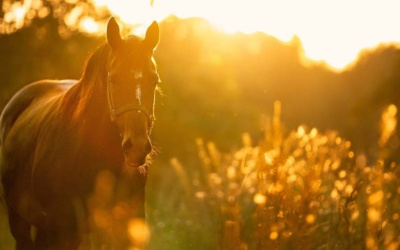 How To Cope With The Death Of Your Horse