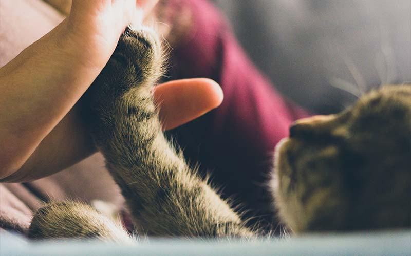 Choosing pet euthanasia